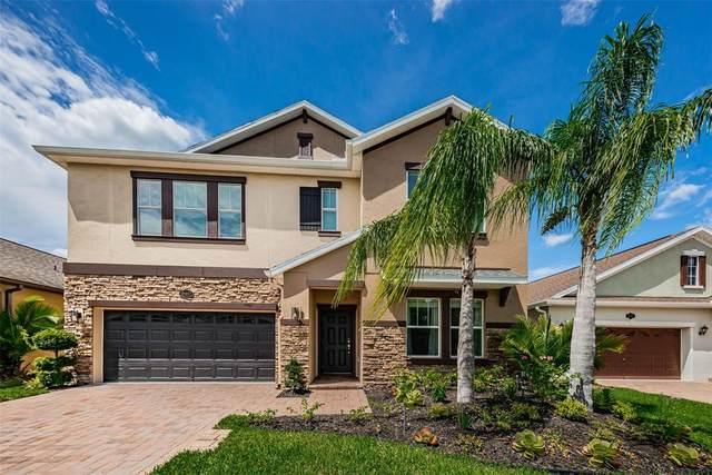 19487 Paddock View Drive, Tampa, FL 33647 (MLS #U8131059) :: Medway Realty