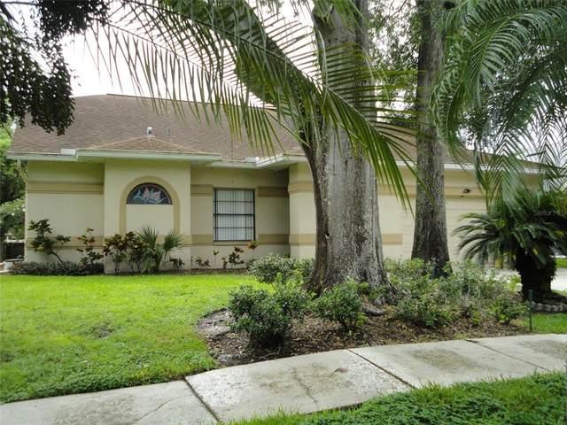 14924 Redcliff Drive, Tampa, FL 33625 (MLS #U8131589) :: Zarghami Group