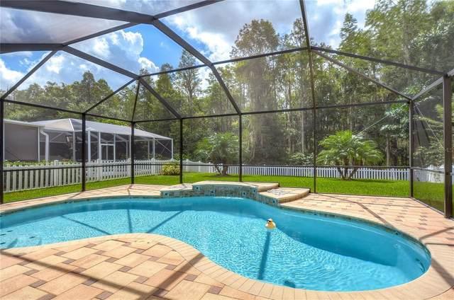Trinity, FL 34655 :: Visionary Properties Inc