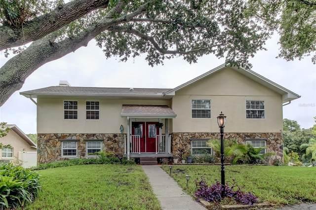 2501 Winding Way, Palm Harbor, FL 34683 (MLS #U8131992) :: McConnell and Associates