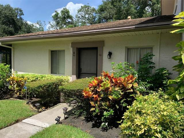 Clearwater, FL 33760 :: Zarghami Group