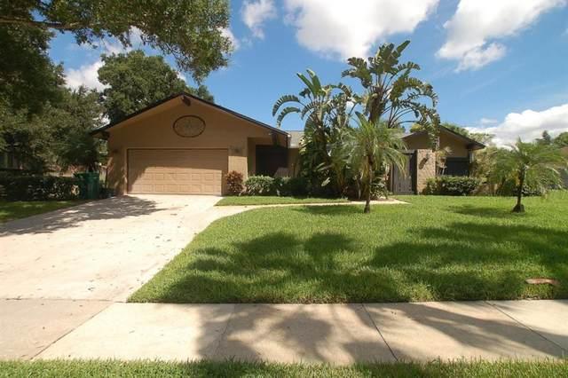 815 Rolling Hills Drive, Palm Harbor, FL 34683 (MLS #U8137392) :: Cartwright Realty