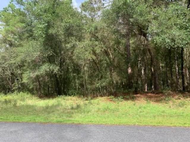 8903 N Irondale Road, Citrus Springs, FL 34434 (MLS #U8137411) :: Delgado Home Team at Keller Williams