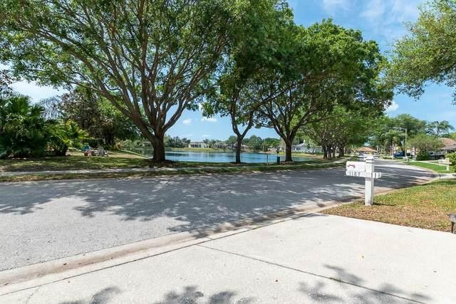 1187 Blackrush Drive, Tarpon Springs, FL 34689 (MLS #U8137539) :: Globalwide Realty