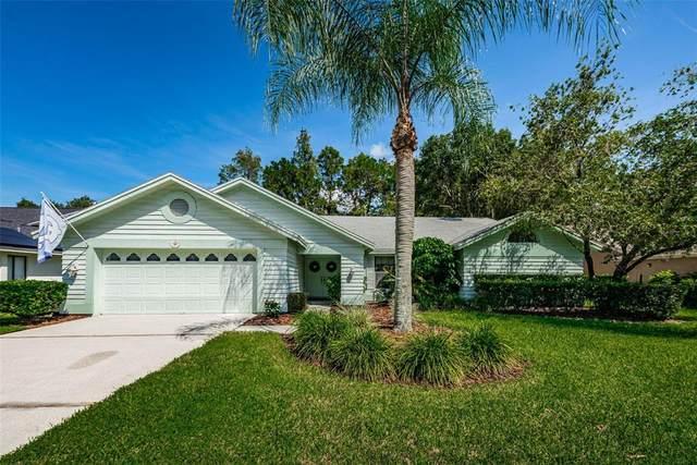 513 Centerwood Drive, Tarpon Springs, FL 34688 (MLS #U8137832) :: Stiver Firth International