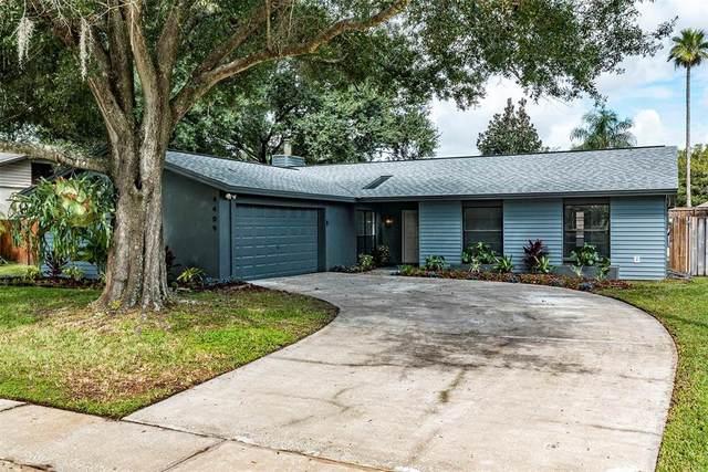 4409 Akita Drive, Tampa, FL 33624 (MLS #U8137899) :: Zarghami Group