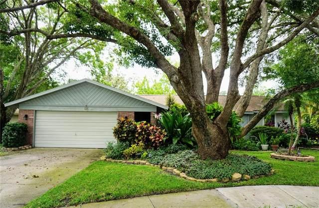 352 Oakhill Court, Palm Harbor, FL 34683 (MLS #U8138030) :: Zarghami Group