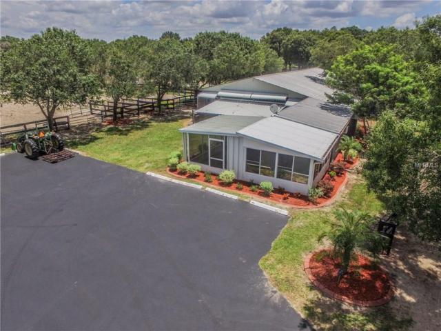 16315 Mcglamery Road, Odessa, FL 33556 (MLS #W7633923) :: Team Bohannon Keller Williams, Tampa Properties