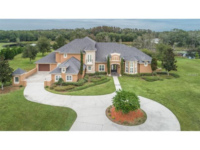 11205 Sunny Delight Court, Odessa, FL 33556 (MLS #W7635427) :: Team Bohannon Keller Williams, Tampa Properties