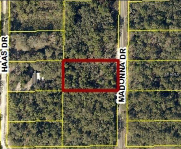 Madonna Drive, Webster, FL 33597 (MLS #W7801036) :: Team Pepka