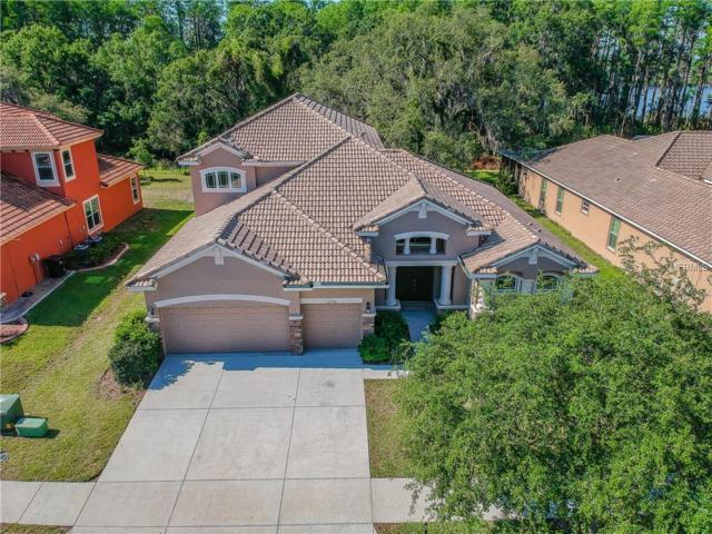 11732 Manistique Way, New Port Richey, FL 34654 (MLS #W7801140) :: The Duncan Duo Team