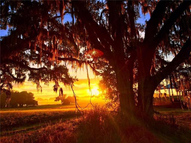 24480 Mondon Hill Road, Brooksville, FL 34601 (MLS #W7802829) :: Pepine Realty