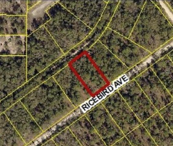 14041 Ricebird Avenue, Weeki Wachee, FL 34614 (MLS #W7806900) :: Delgado Home Team at Keller Williams