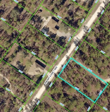 12368 Snowy Egret Avenue, Weeki Wachee, FL 34614 (MLS #W7811344) :: Baird Realty Group