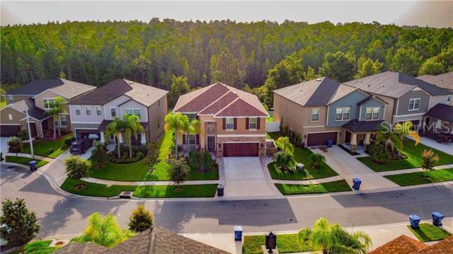 4430 Shrewbury Place, Land O Lakes, FL 34638 (MLS #W7813820) :: Lock & Key Realty