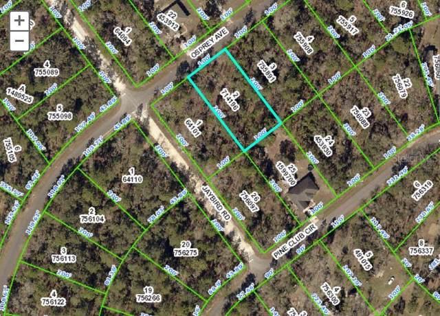 11989 Osprey Avenue, Weeki Wachee, FL 34614 (MLS #W7815296) :: White Sands Realty Group