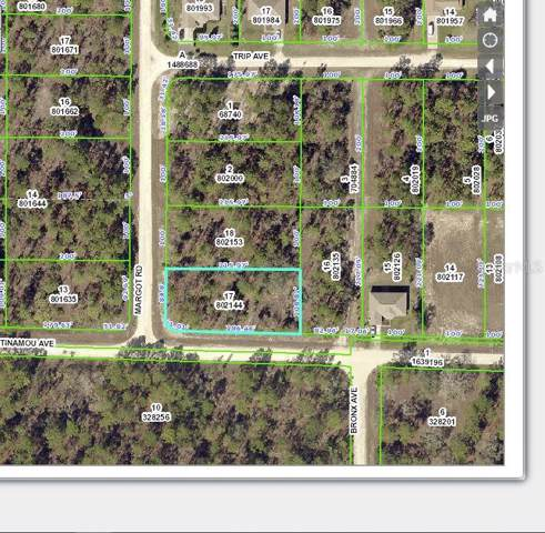 11407 Tinamou Avenue, Weeki Wachee, FL 34614 (MLS #W7818644) :: Premium Properties Real Estate Services