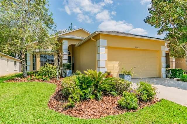 18018 Webster Grove Drive, Hudson, FL 34667 (MLS #W7824501) :: Dalton Wade Real Estate Group