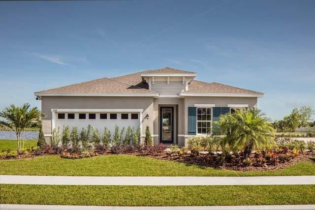 18247 Falling Pine Needle Lane, Land O Lakes, FL 34638 (MLS #W7826536) :: Rabell Realty Group