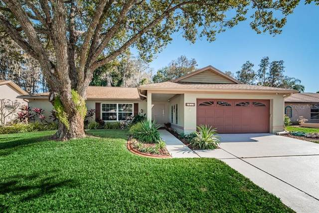 3534 Player Drive, New Port Richey, FL 34655 (MLS #W7828849) :: Griffin Group