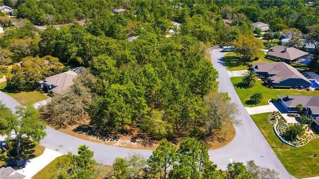 10 Bonnie Drive, Homosassa, FL 34446 (MLS #W7832421) :: Armel Real Estate