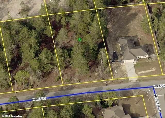 12039 Murre Avenue, Weeki Wachee, FL 34614 (MLS #W7833527) :: Bustamante Real Estate