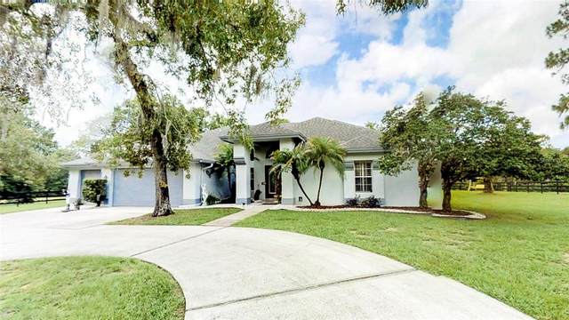 11639 Wild Cat Lane, New Port Richey, FL 34654 (MLS #W7835053) :: The Hustle and Heart Group