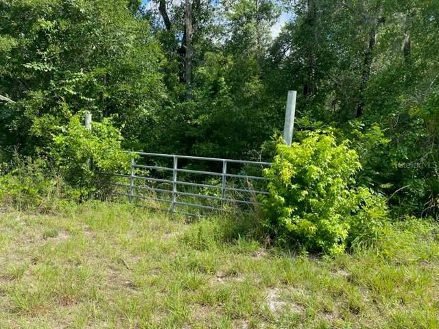 Webster, FL 33597 :: Griffin Group