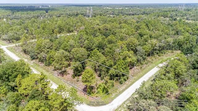 Sooty Tern Avenue, Weeki Wachee, FL 34614 (MLS #W7836000) :: Baird Realty Group