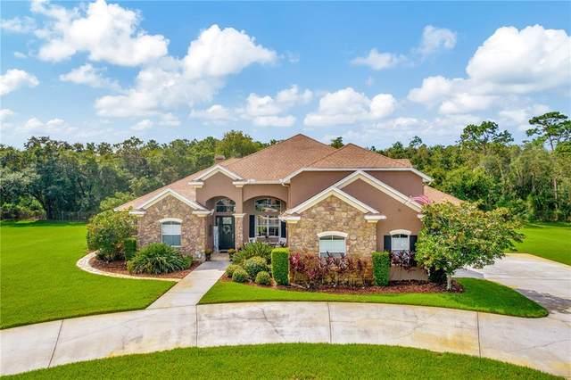 1142 Oak Meadow Point, New Port Richey, FL 34655 (#W7838053) :: Caine Luxury Team