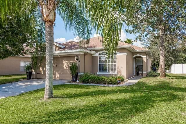 11501 Bathgate Court, New Port Richey, FL 34654 (#W7839069) :: Caine Luxury Team