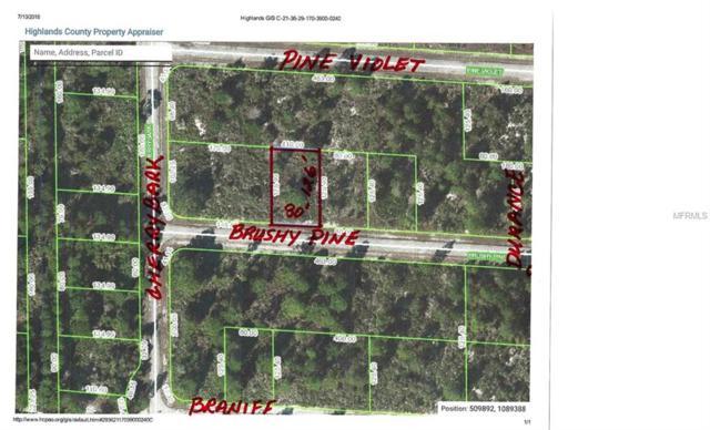 3421 Brushy Pine Road, Lake Placid, FL 33852 (MLS #C7227411) :: The Duncan Duo Team