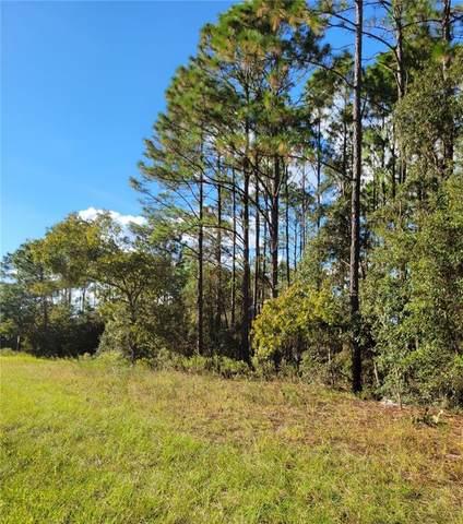 1536 W Palmview Drive, Citrus Springs, FL 34434 (MLS #OM628696) :: Vacasa Real Estate