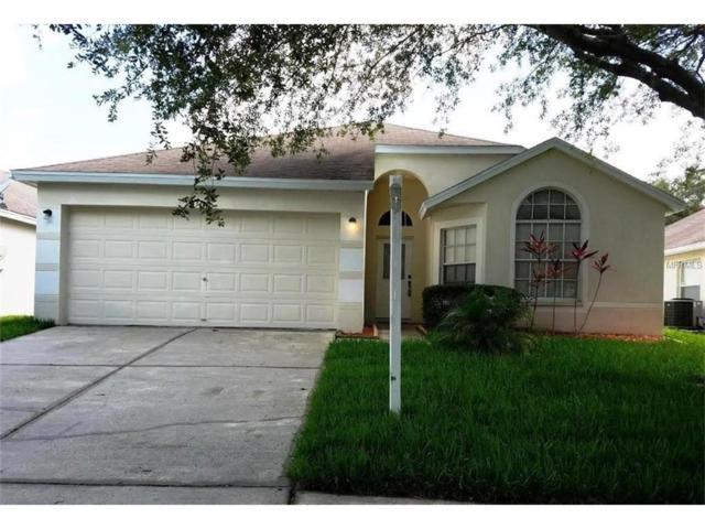 13406 White Elk Loop, Tampa, FL 33626 (MLS #T2888924) :: Griffin Group