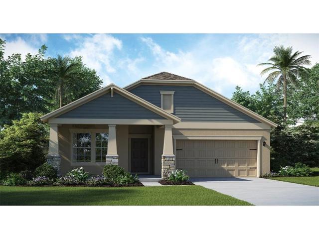10204 Lovegrass Lane, Orlando, FL 32832 (MLS #T2914734) :: Godwin Realty Group