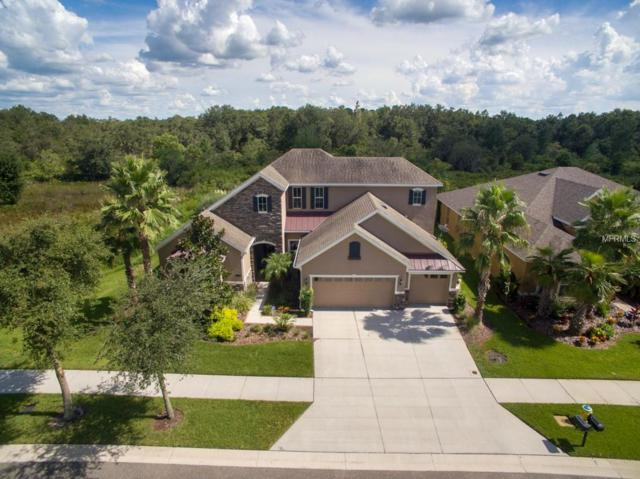 10519 Mistflower Lane, Tampa, FL 33647 (MLS #T3126126) :: Team Bohannon Keller Williams, Tampa Properties