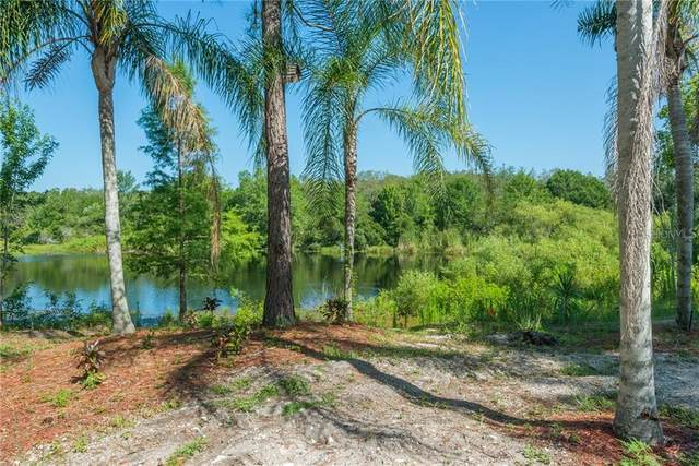 14824 N 19TH Street, Lutz, FL 33549 (MLS #T3177288) :: Team Buky