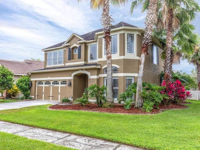 11244 Blacksmith Drive, Tampa, FL 33626 (MLS #T3241108) :: Lucido Global