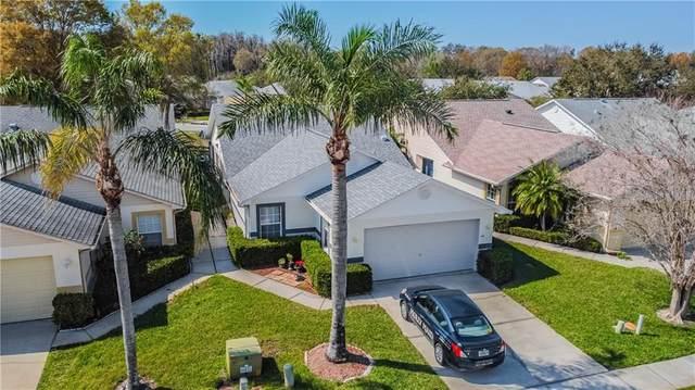 6624 Gentle Ben Circle, Wesley Chapel, FL 33544 (MLS #T3293136) :: EXIT King Realty