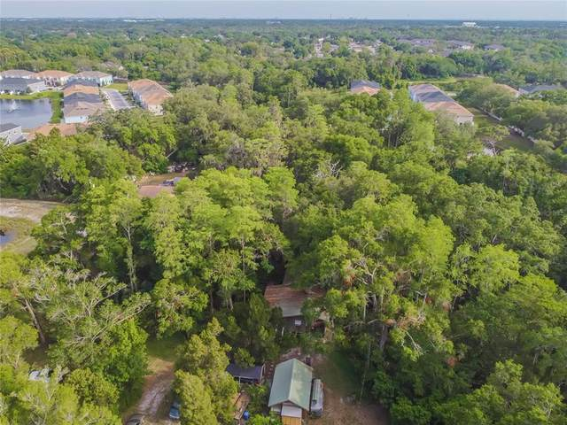 6704 Gunn Highway, Tampa, FL 33625 (MLS #T3302981) :: Armel Real Estate