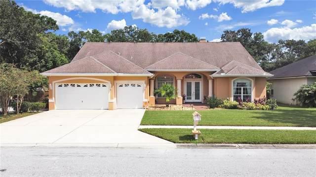 14909 Evershine Street, Tampa, FL 33624 (MLS #T3330746) :: Zarghami Group
