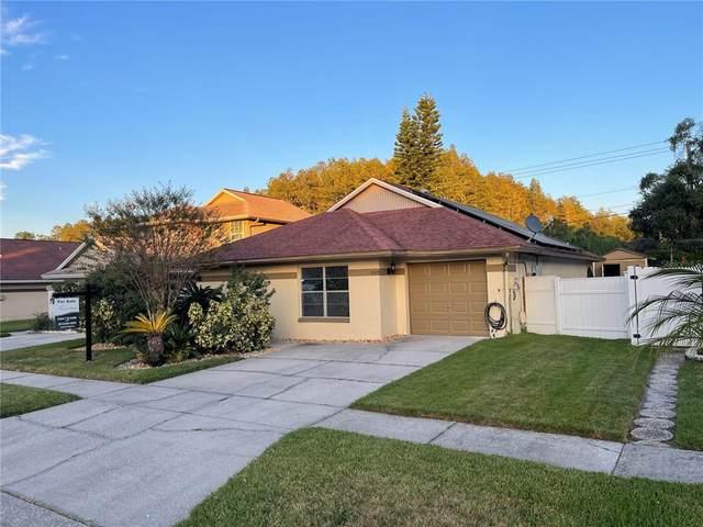 11913 Hickorynut Drive, Tampa, FL 33625 (MLS #T3334577) :: Cartwright Realty