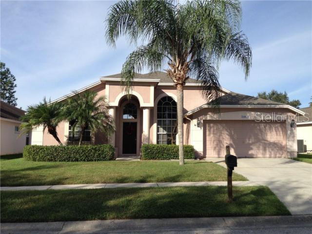 18012 Palm Breeze Drive, Tampa, FL 33647 (MLS #U8033049) :: The Duncan Duo Team