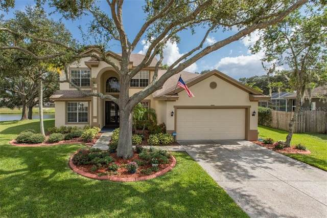 443 Equine Drive, Tarpon Springs, FL 34688 (MLS #W7827553) :: Griffin Group
