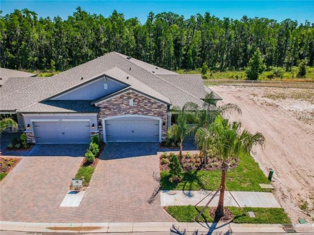 19373 Hawk Valley Drive, Tampa, FL 33647 (MLS #T2921729) :: Lovitch Realty Group, LLC