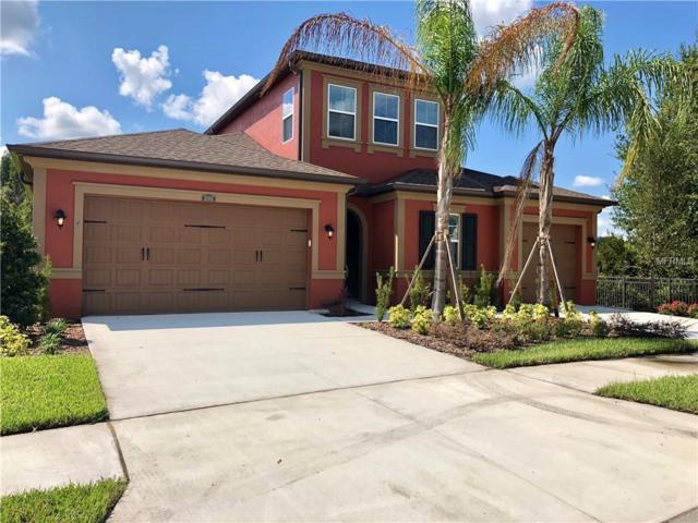 31982 Bourneville Terrace, Wesley Chapel, FL 33543 (MLS #T3129061) :: The Light Team