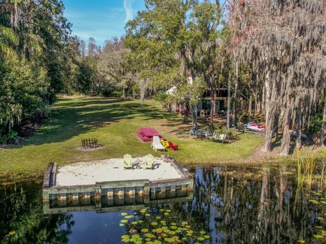 19121 N Dale Mabry Highway, Lutz, FL 33548 (MLS #T3152084) :: Burwell Real Estate