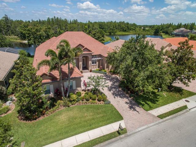 1538 El Pardo Drive, Trinity, FL 34655 (MLS #W7812155) :: Griffin Group