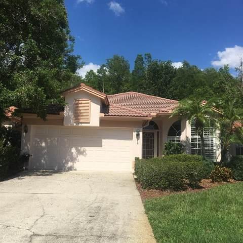 1377 Dartford Drive, Tarpon Springs, FL 34689 (MLS #W7832796) :: Team Borham at Keller Williams Realty