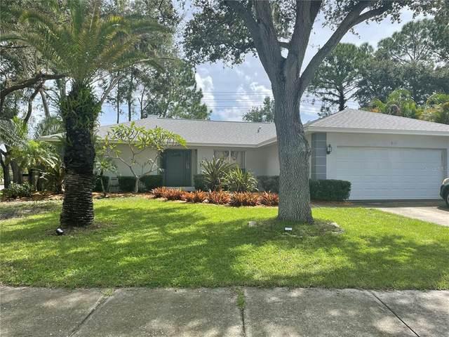 3114 Bishop Drive, Safety Harbor, FL 34695 (MLS #U8136686) :: Zarghami Group